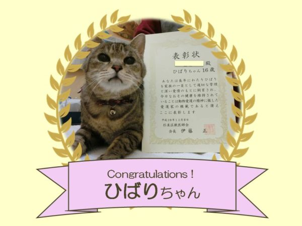 猫 ひばりちゃん