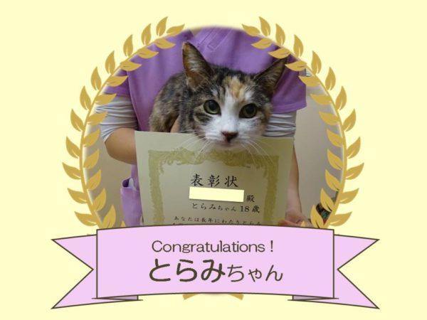 猫 とらみちゃん