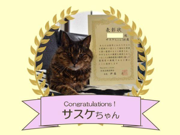 猫 サスケちゃん