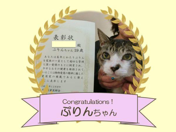 猫 ぷりんちゃん